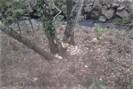Tree Damage in Seattle