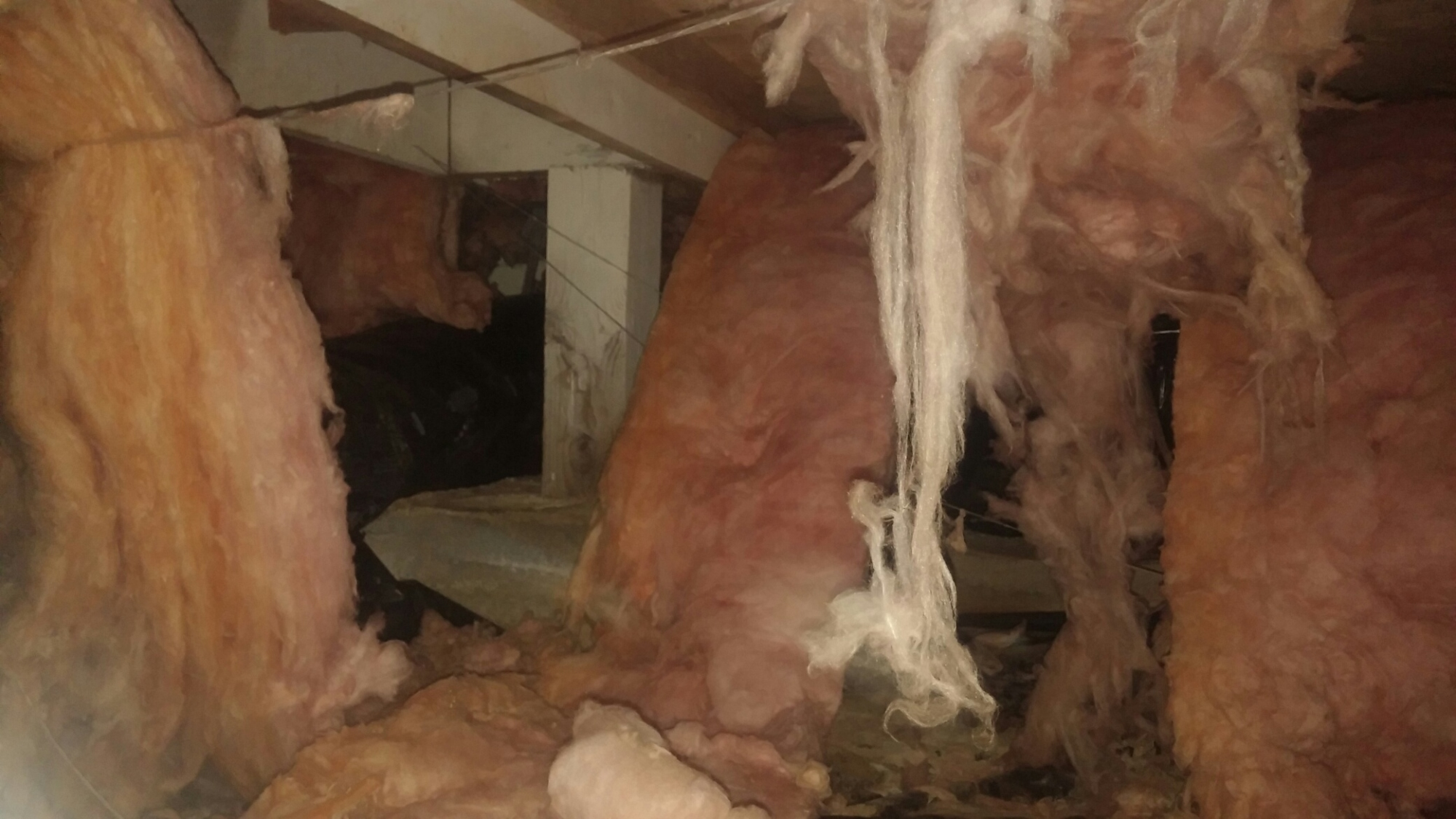 Insulation Damage & Cleanup in Seattle